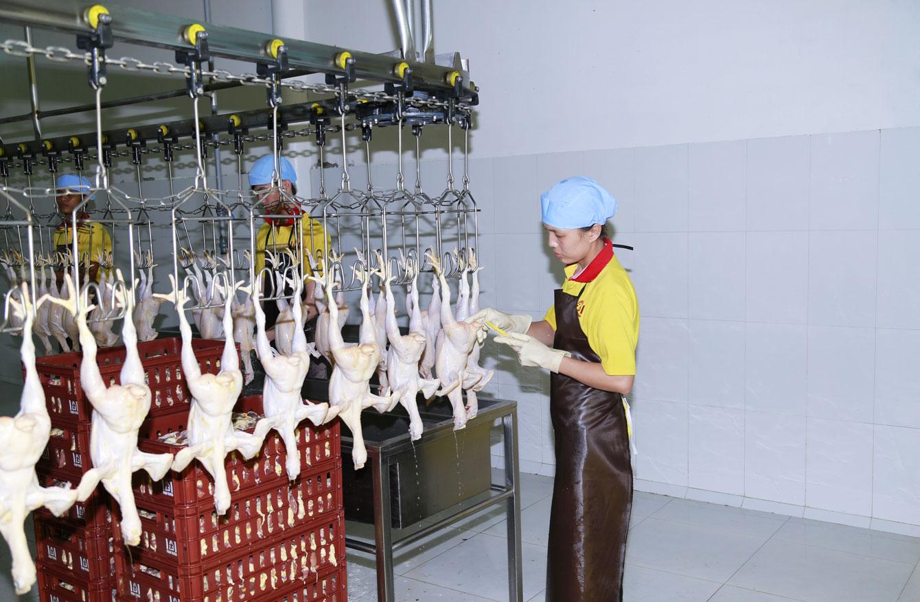 TP.HCM có chuỗi thịt gà an toàn